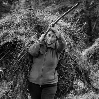 Bringing in the Hay
