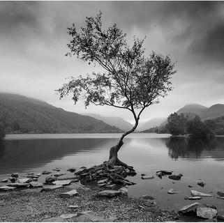 Lone Tree, Lynn Padarn