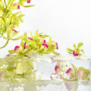 Orchids and Ice