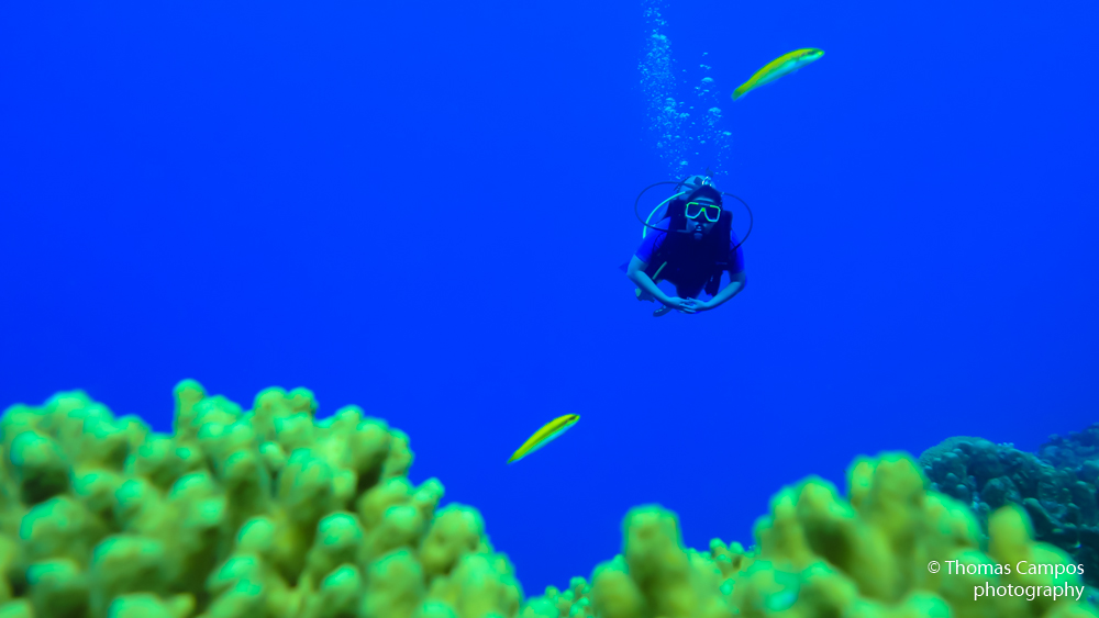 Scuba Diver and Two Fish