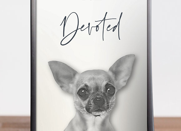 """Chihuahua 