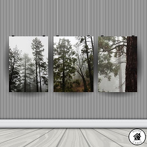 Tri Poster Mock up-Morning Forest.jpg