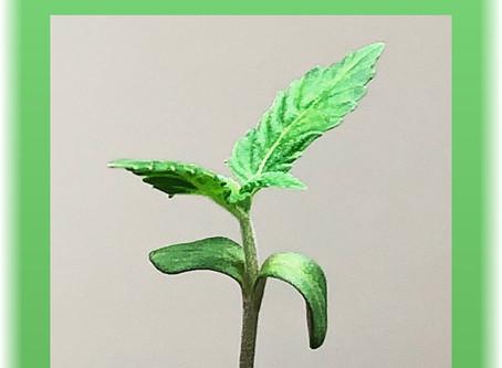 GreenNurse On The Grow #1