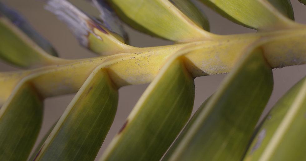 palm branch.jpg