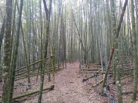 Hiking Sun Moon Lake's Shuishe Great Mountain Nature Trail