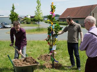 Ein Baum als Symbol der langen Firmengeschichte