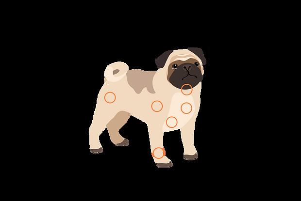 dog_1.png