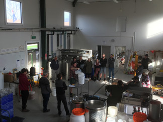 Making Mead in the Wine Capital