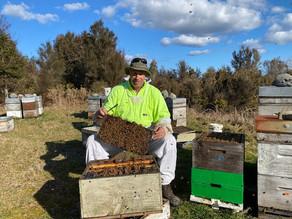 Blackball Beekeeping Innovations