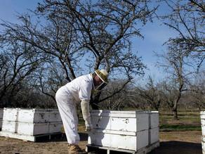 Honey Bee's Healthy Alternatives to Social Distancing