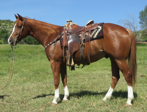 SOLD 2010 Class-Act Cow Horse AQHA Gelding, 15.1 Hands, 1175 lbs