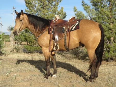 SOLD 2009 Big Gold Buckskin Ranch Horse Deluxe, 15.2 Hands, 1250 lbs.