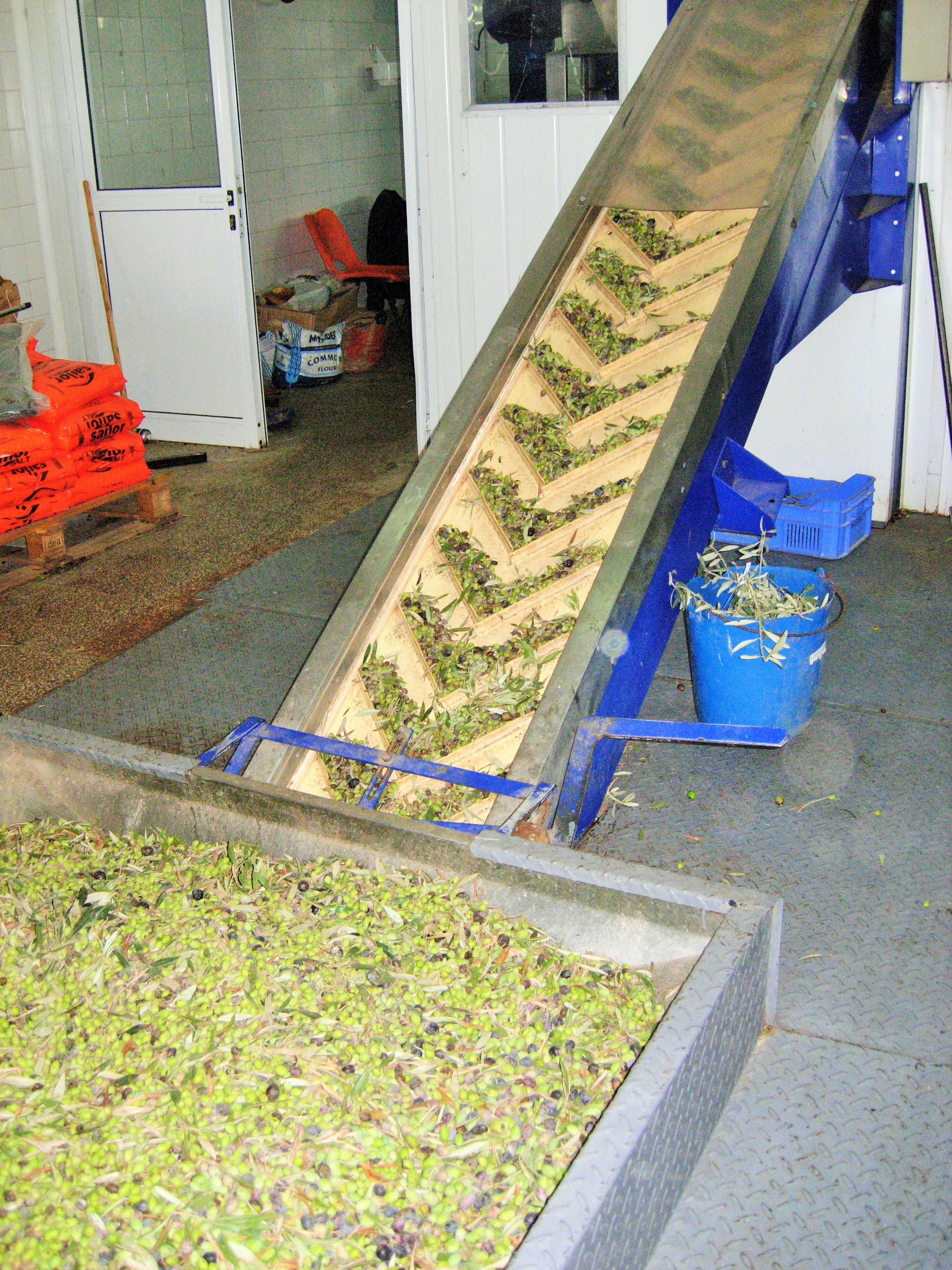 Olives loading into the washer