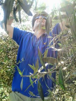 Raining olives?