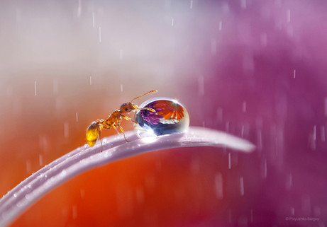 Ant and drop of water
