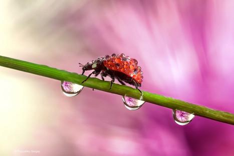 ladybug crawls on a flower stalk