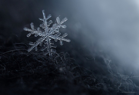 Winter macroworld