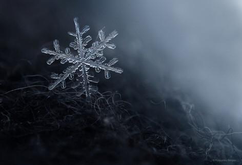 Winter macroworld