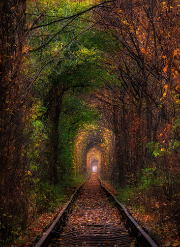 Autumn in the tunnel of love.