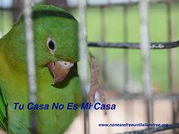 None Are Free Poster Tu Casa v2.jpg