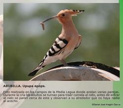 pag26-Alquimia de Luz