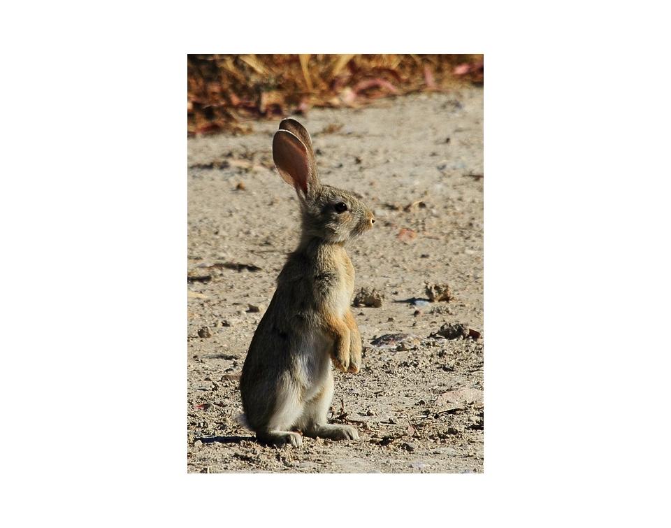 conejo2-pre