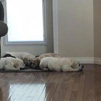 puppyevals.jpg