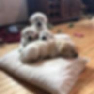 puppypile.jpg