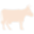Orange Cow Icon