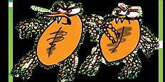 Pair of ticks illustraton