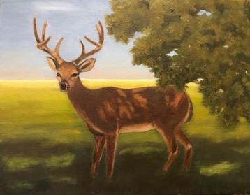 """A deer in my backyard"""