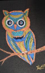 """My LIttle Owl"""
