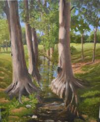 """Cypress Creek"""