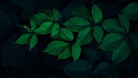 Ivy%20Plant_edited.png