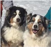 Rita's Dogs.jpg