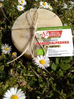 Caciotta di Vacca bianca Val Padana al Tartufo