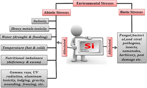 Abiotic and biotic stress interactions.j
