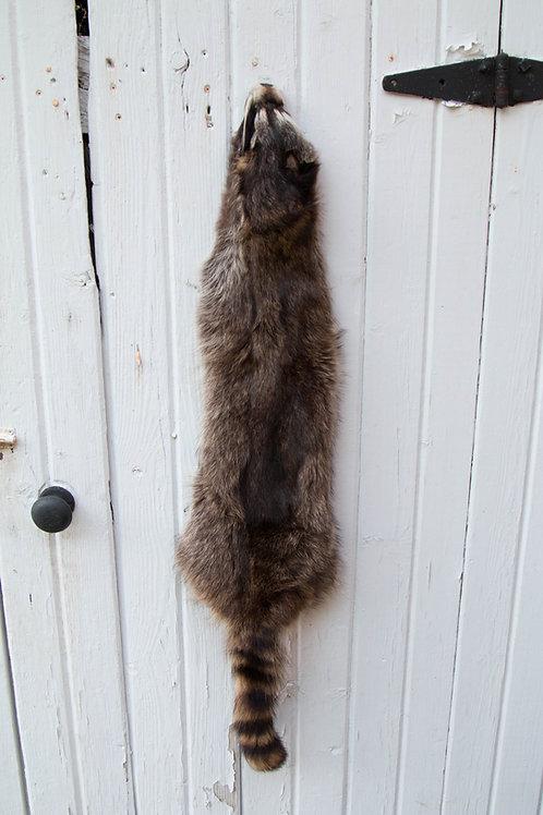 Raccoon wall hanger fur
