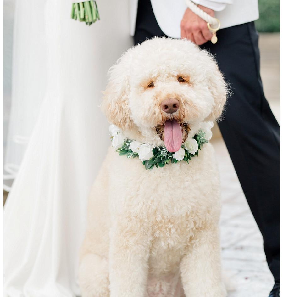 AisPortraits-Birmingham-Wedding-Photogra