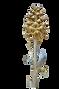 Orchidées d'Algérie