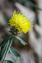 Flore d'Algérie
