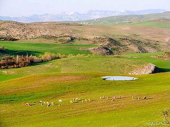 El Maouane Algérie