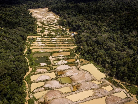 Greenpeace reconhece necessidade da legalização da mineração na Amazônia.