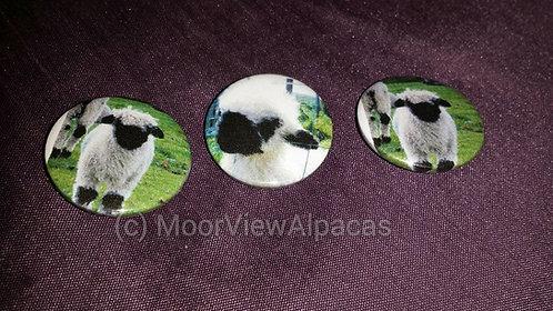 Blacknose sheep Badge