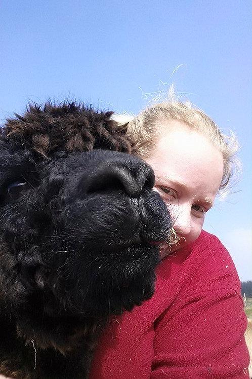 Alpaca Adoption Fiona