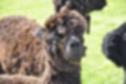 Alpacas Athos Kids Holiday Days Out