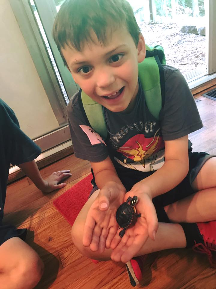 Cole Herbst. baby painted turtle