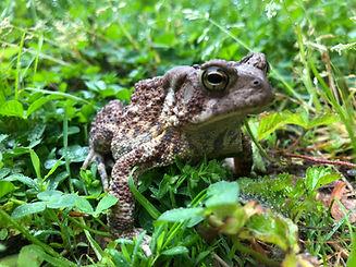 toad 1.jpg