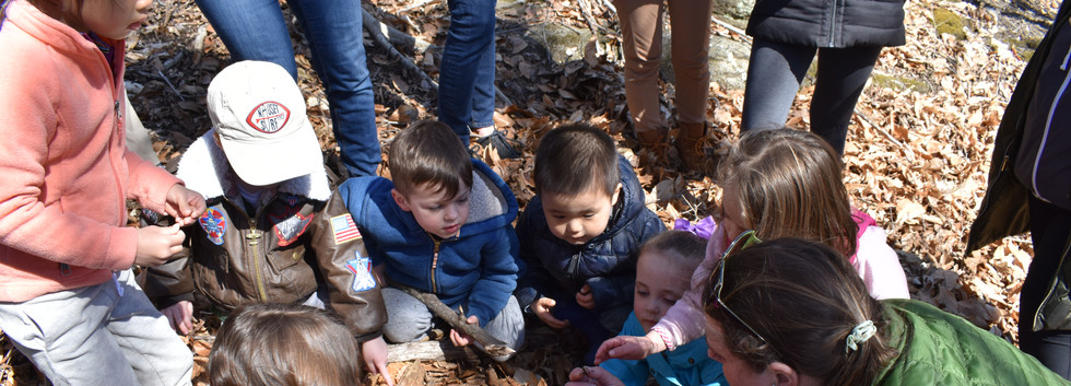 Snail egg discovery