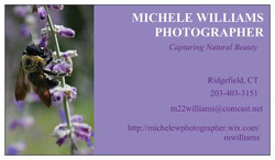 Michele Williams Photography